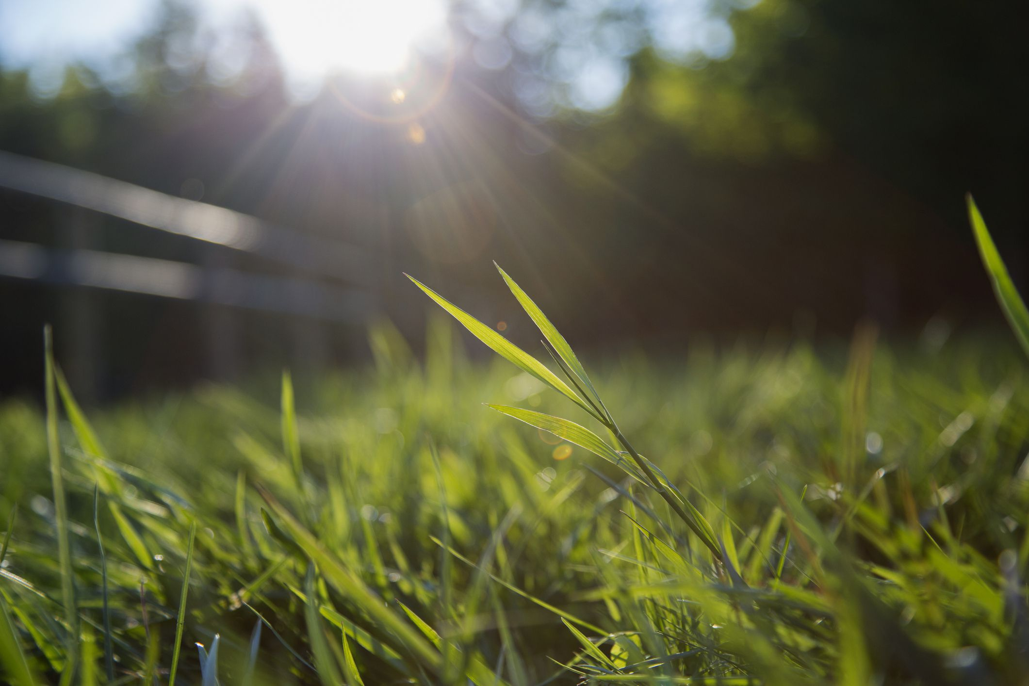 How To Kill Grass The Natural Way Using Newspapers