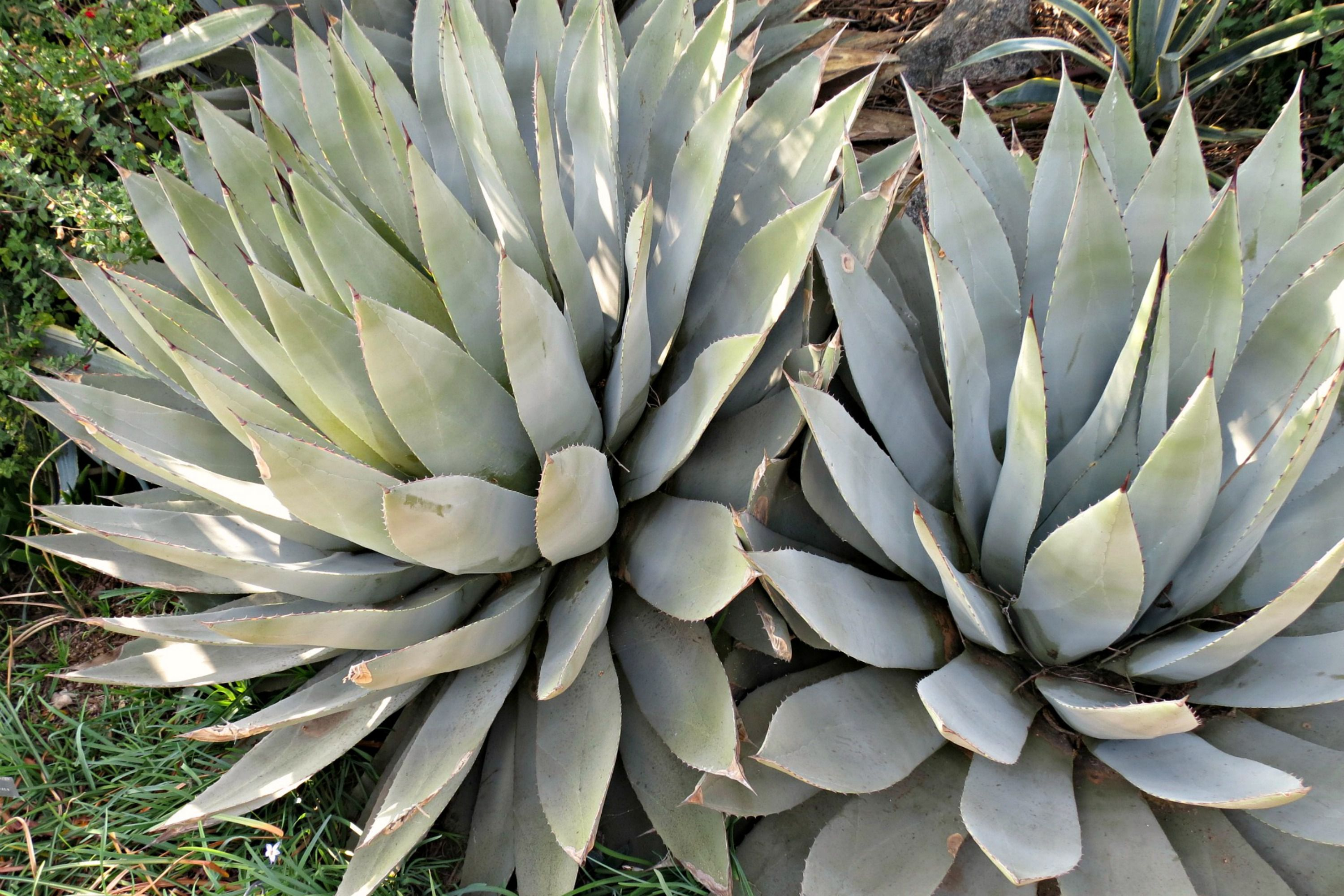 Choose The Best Succulents For Landscaping