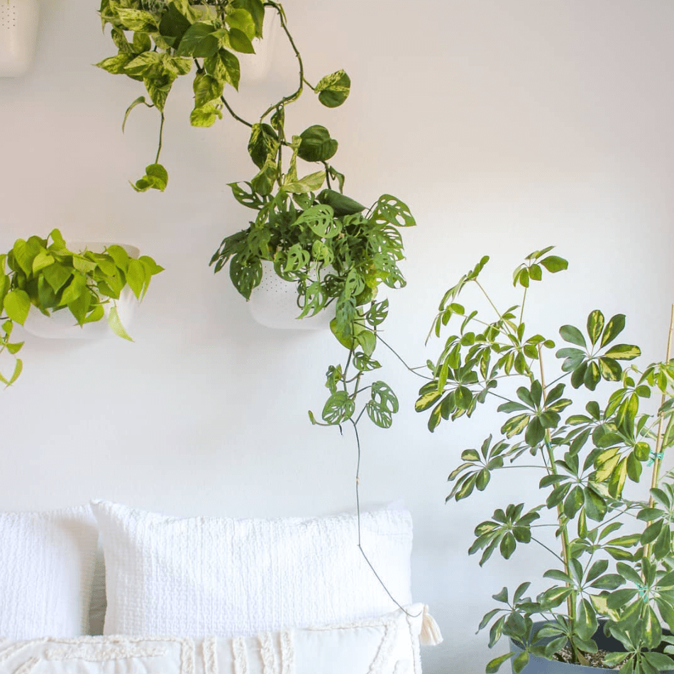 Wall-mounted plants over a bed.