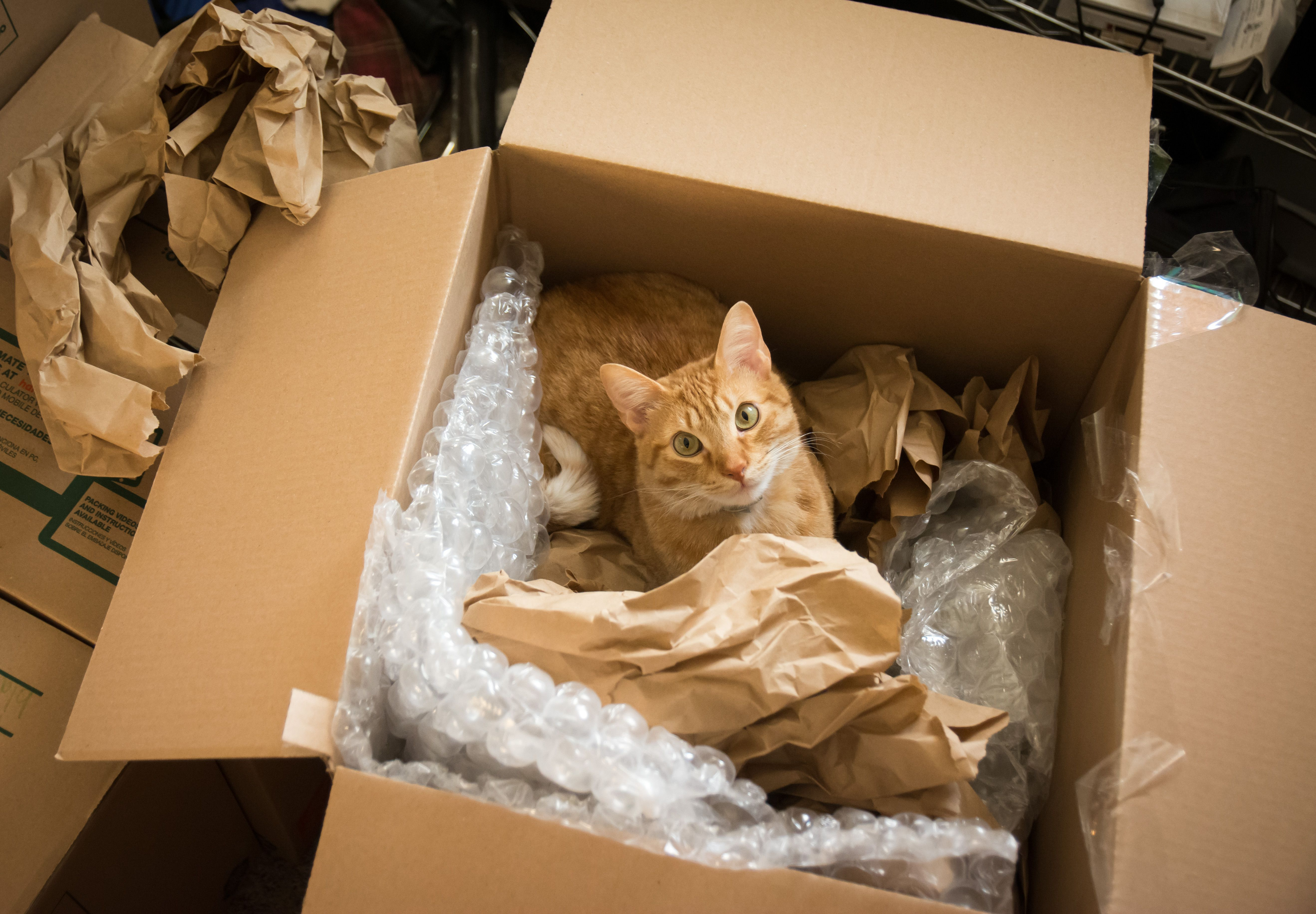 Ways to get your home safely packed and moved - Things to do before moving into new house ...