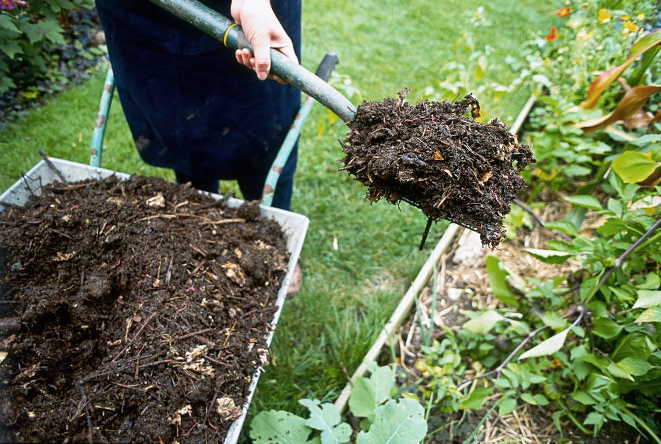 Person moving mulch from wheelbarrow with pitch fork
