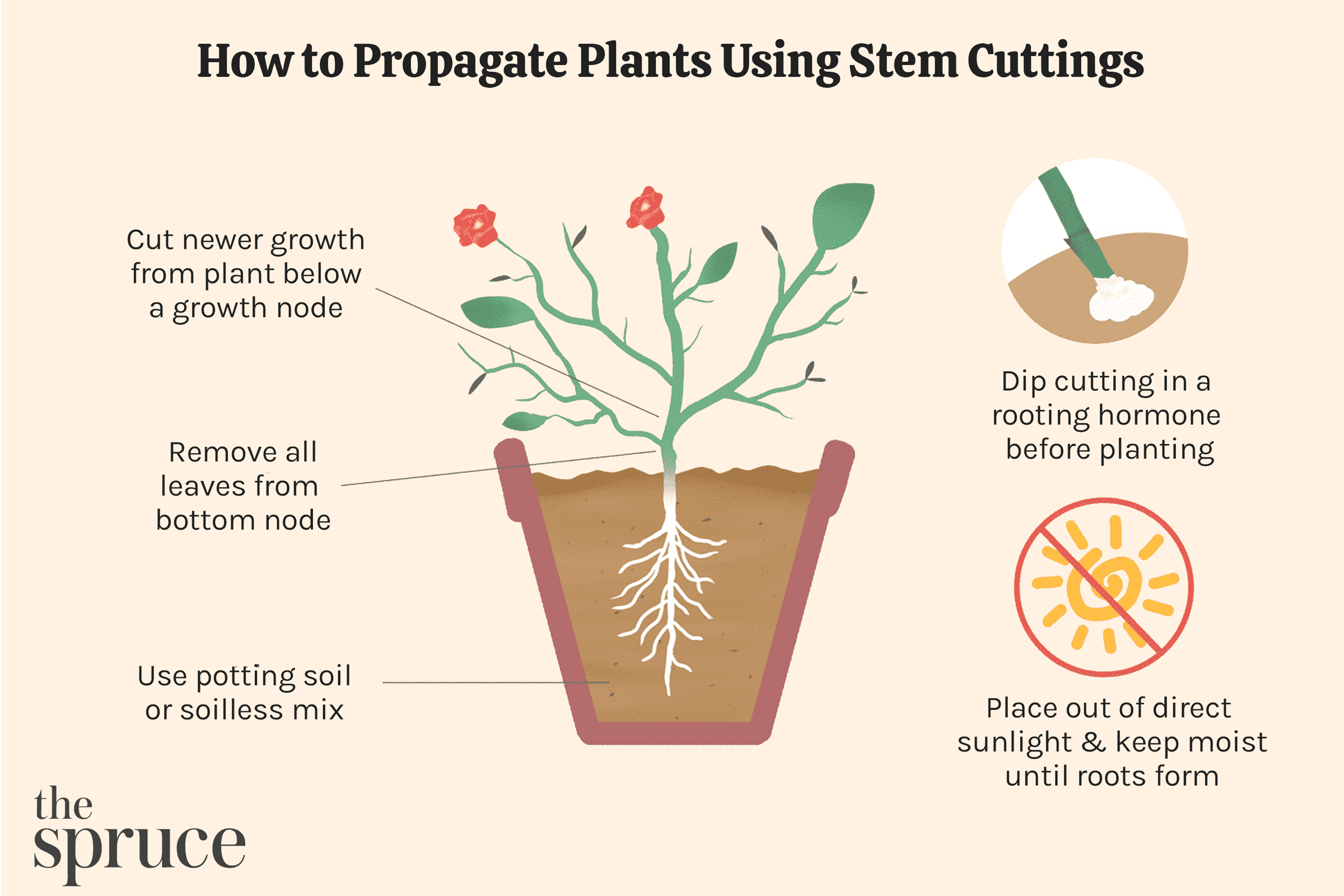 How to Propagate Plants Using Stem Cuttings