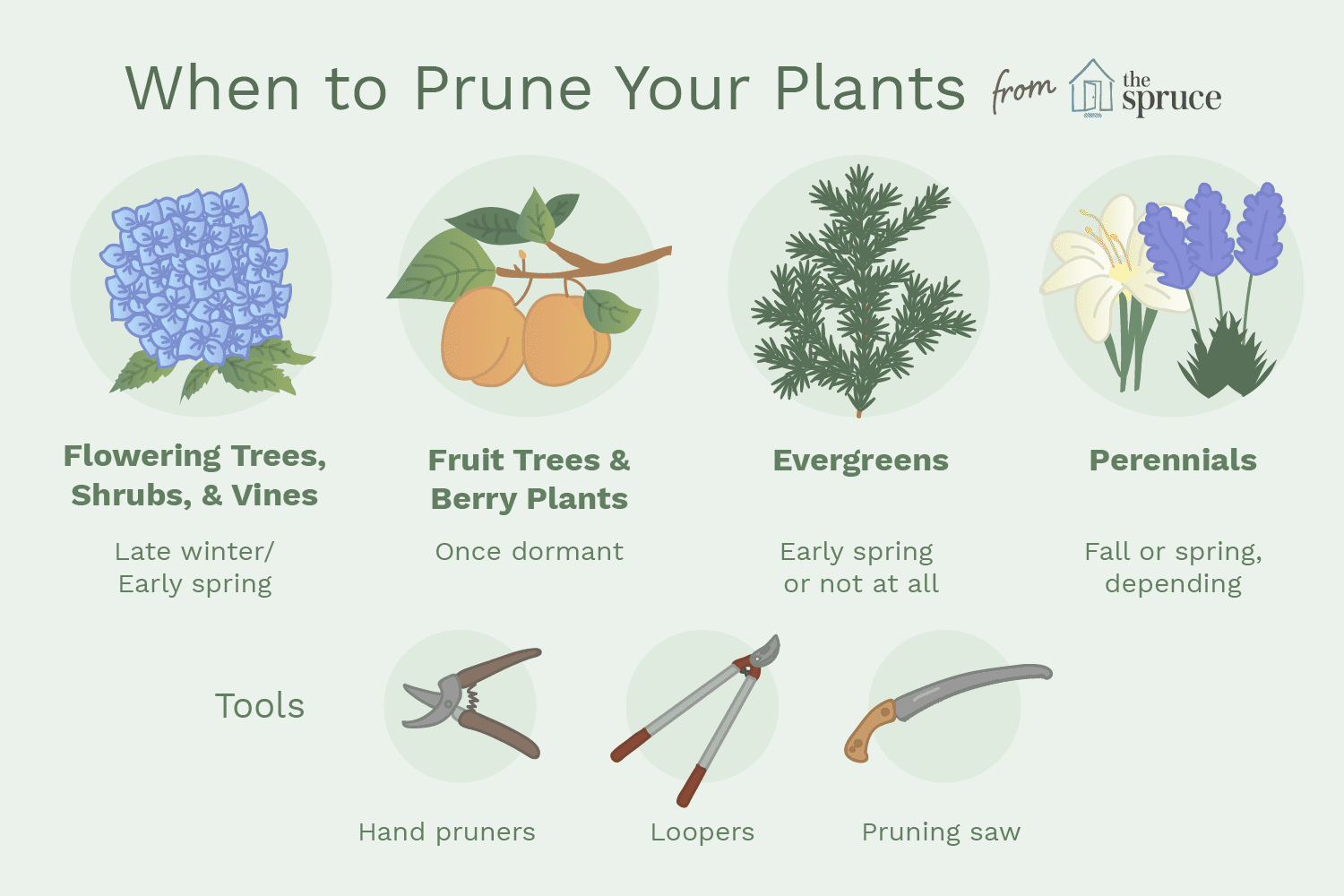 How To Prune Trees And Plants