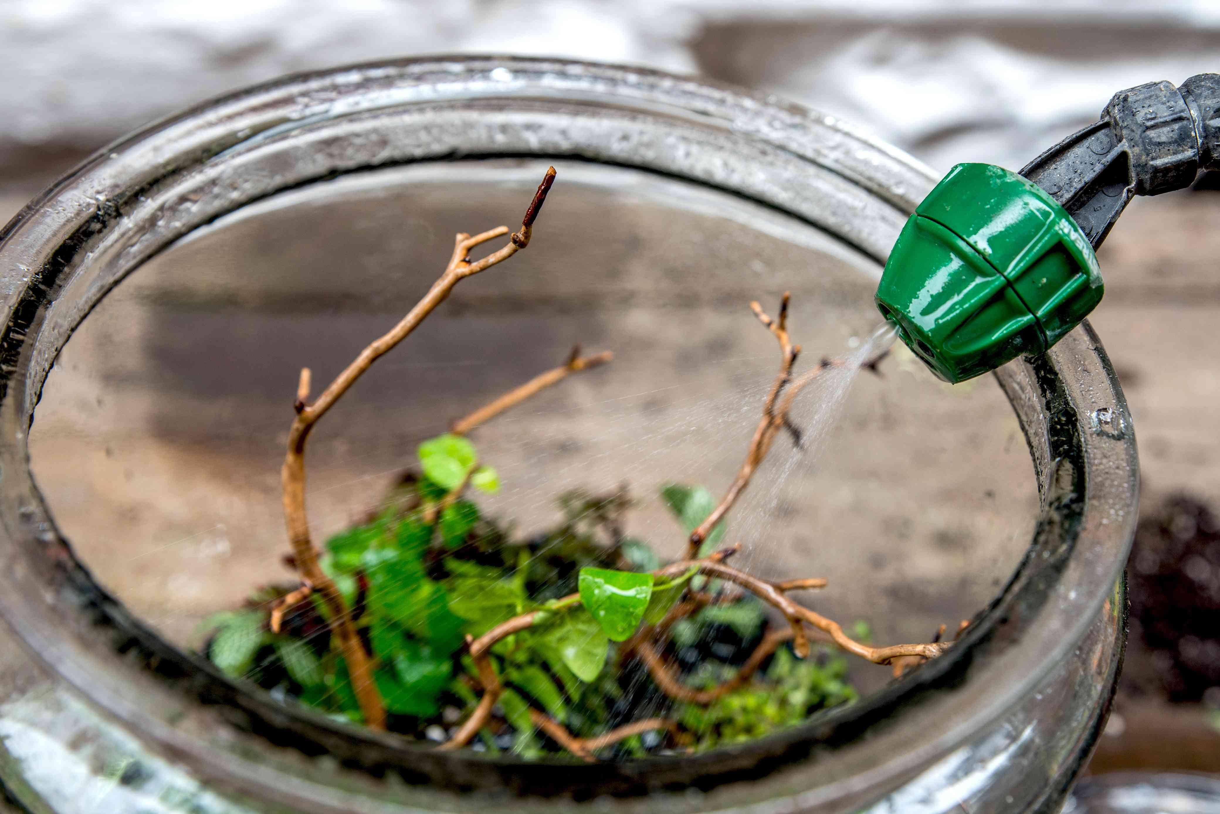 watering the terrarium