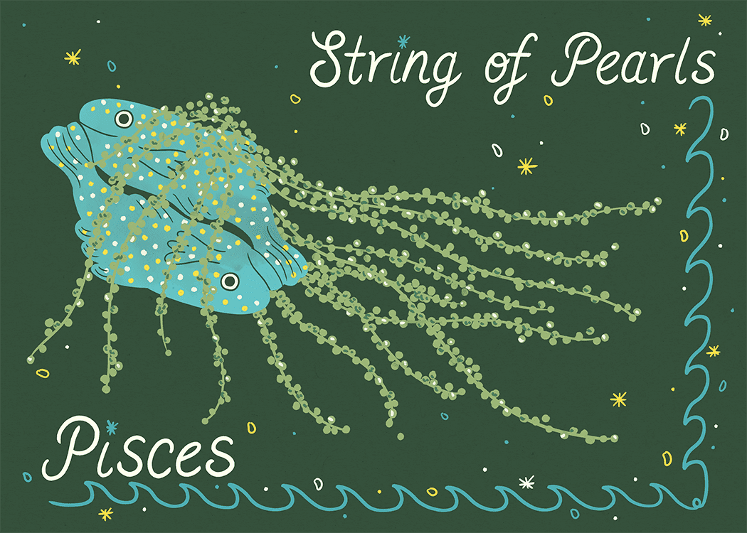 pisces string of pearls illustration