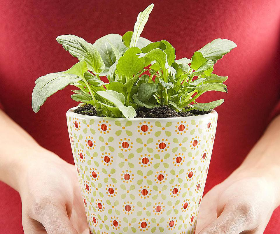 Woman in red sweater holding plant in patterned pot