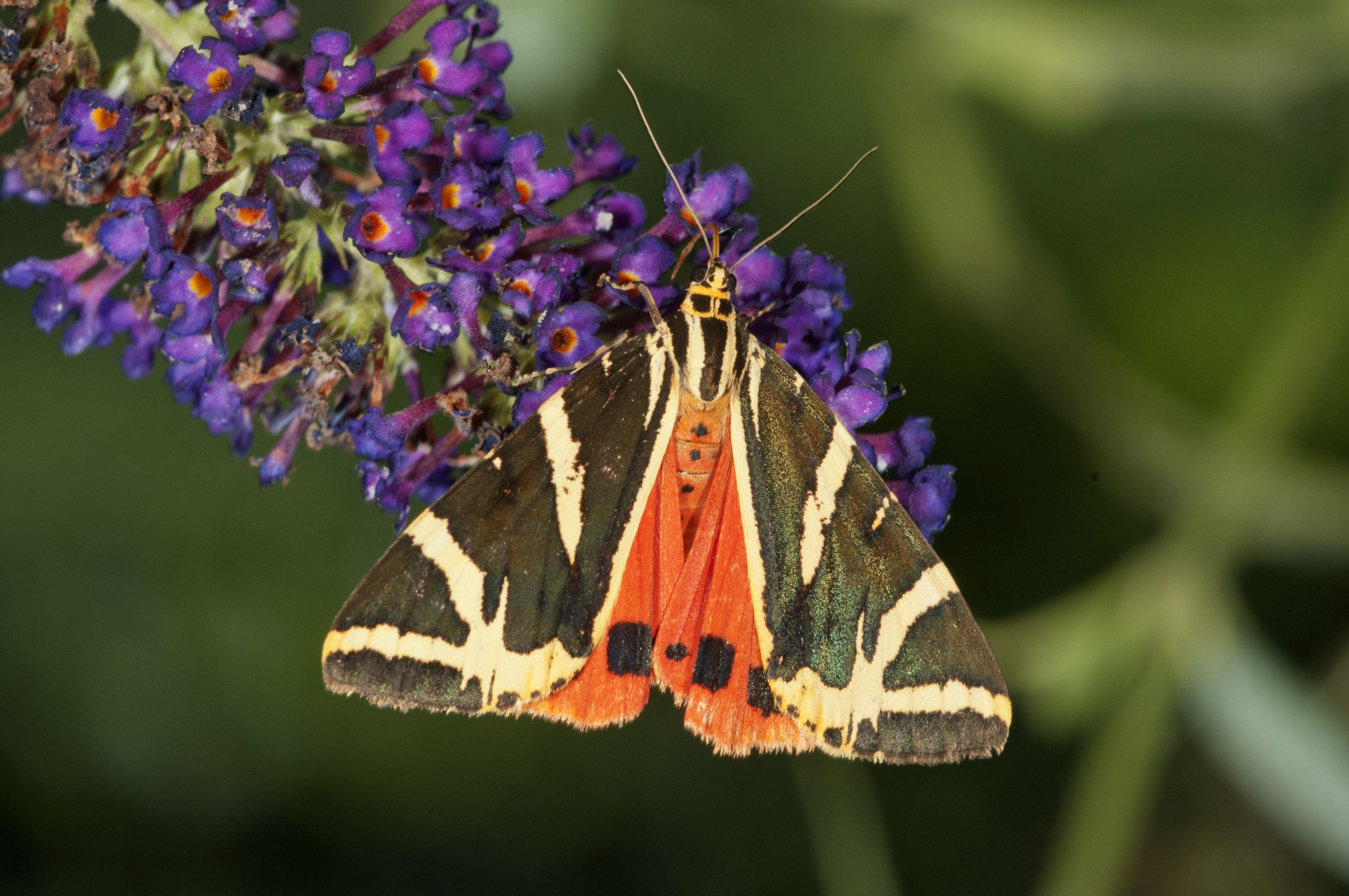 Flowers For Moth Gardens