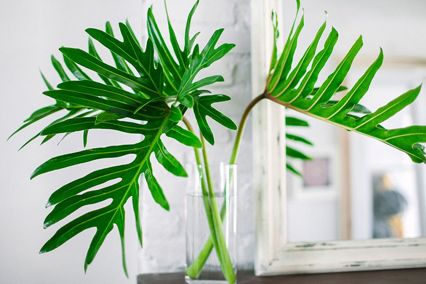 large palm leaves in a glass of water
