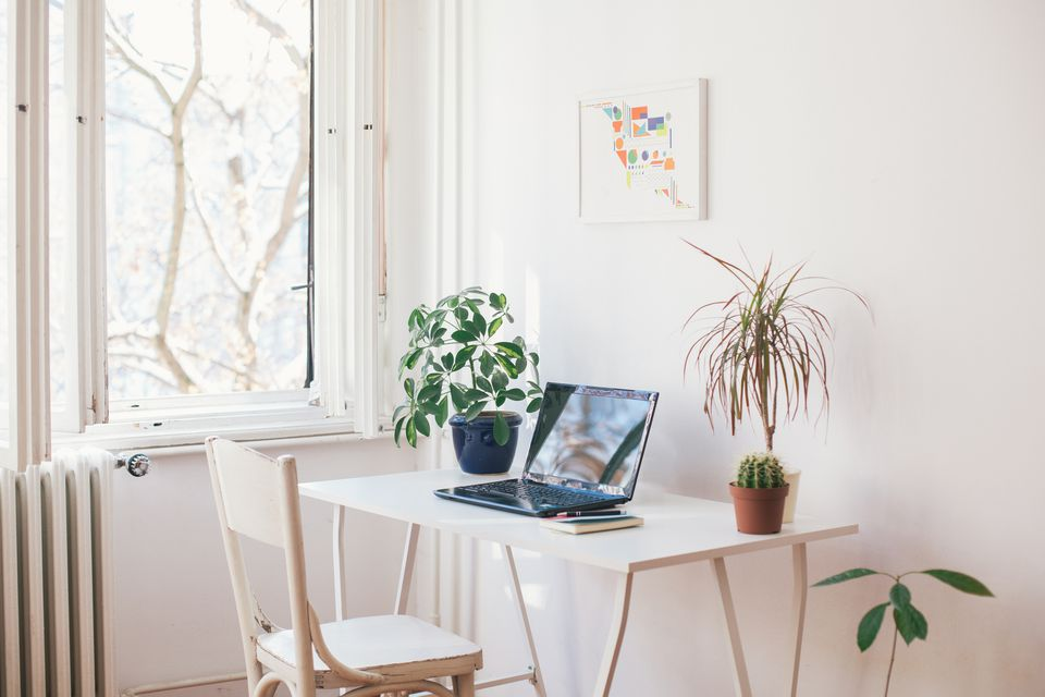 Laptop on a desk with plants