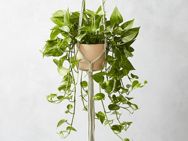 The 7 Best Macramé Plant Hangers Of 2020