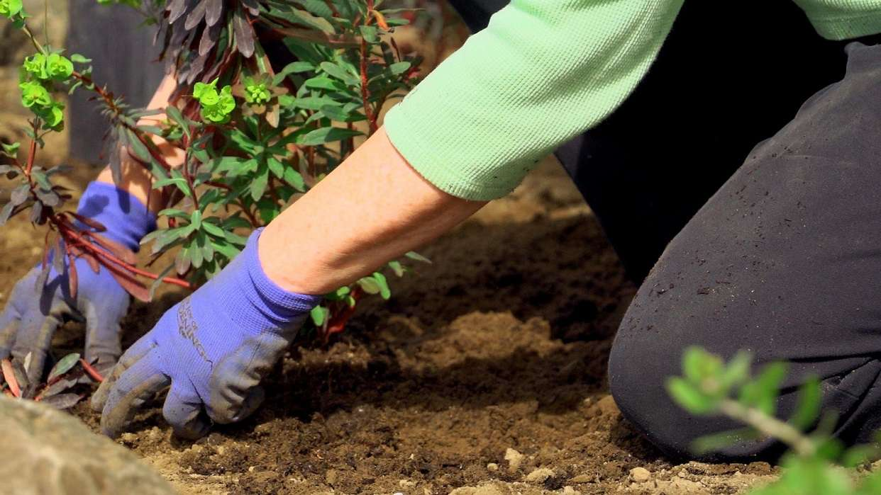 Person wearing blue gloves while gardening