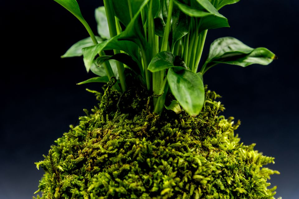 Plant growing in sphagnum moss