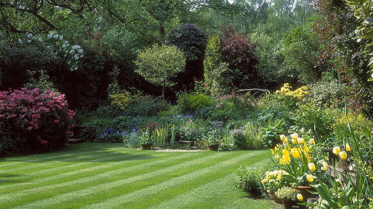 How To Start A Lawn From Seed