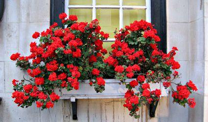 Container Garden Ideas Inspiration