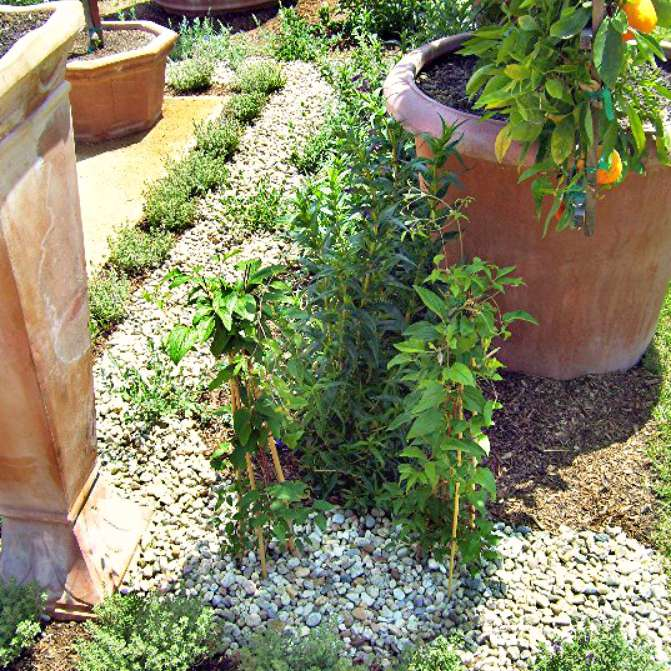 gravel patio surrounded by plants