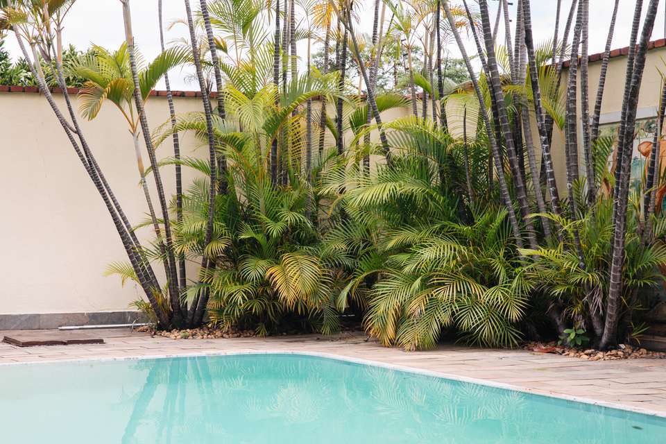 plants by a pool