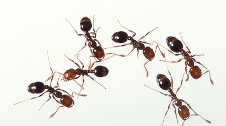 How To Identify And Control Ants