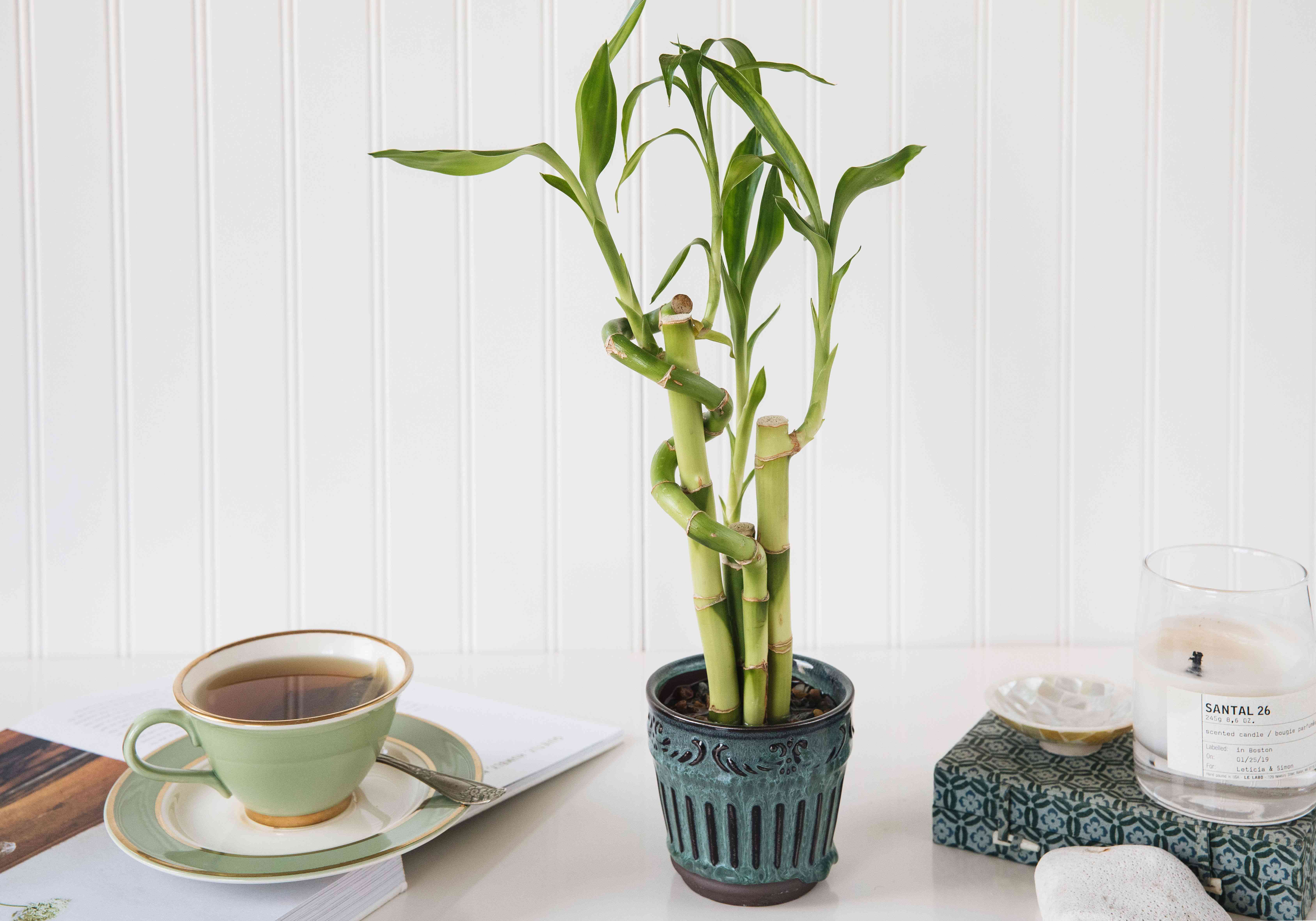 Lucky bamboo plant in blue ceramic pot next to green cup of tea and feng shui items
