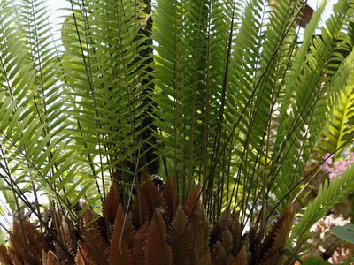 The 4 Basics Of Growing Ferns Indoors