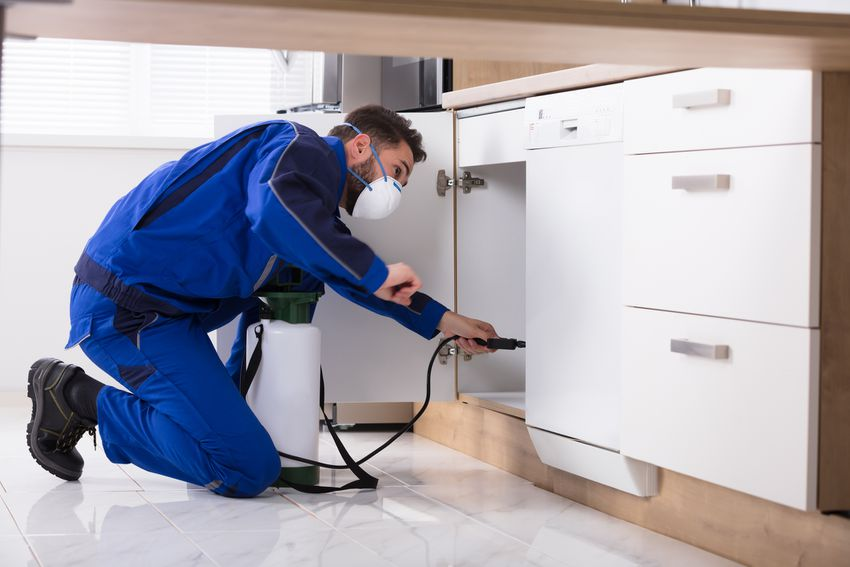 an exterminator spraying pesticide in a cabinet