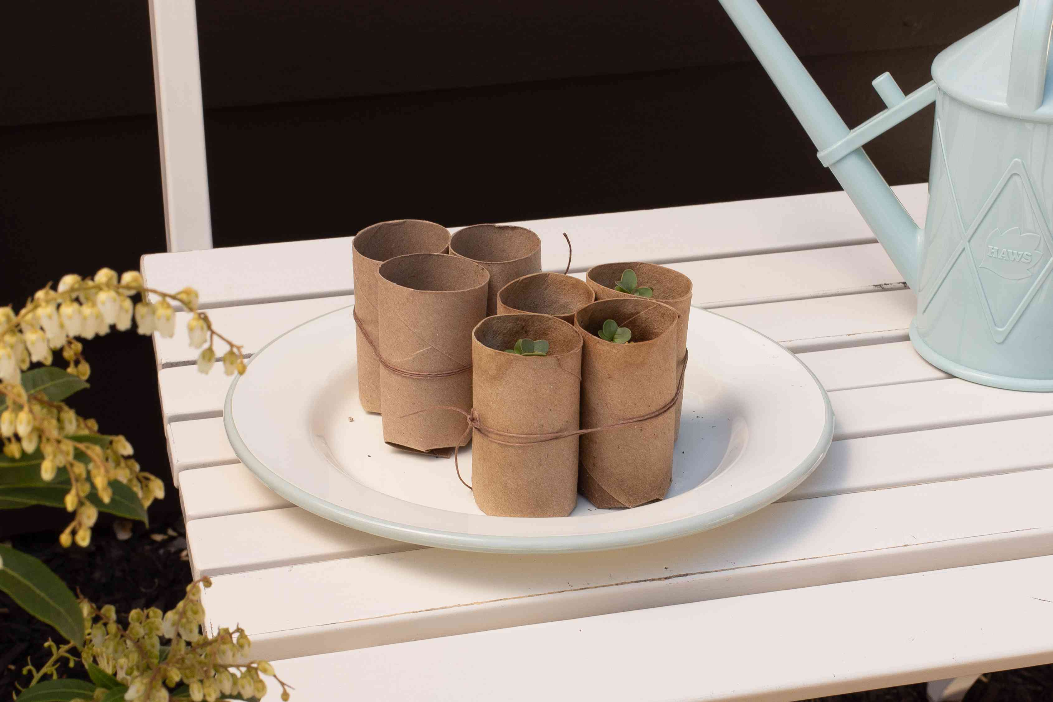 Toilet paper rolls with sprouts placed in garden to acclimate to outside weather