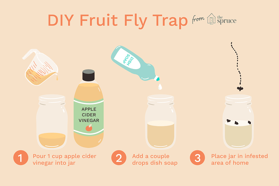 Illustration of how to make a fruit fly trap
