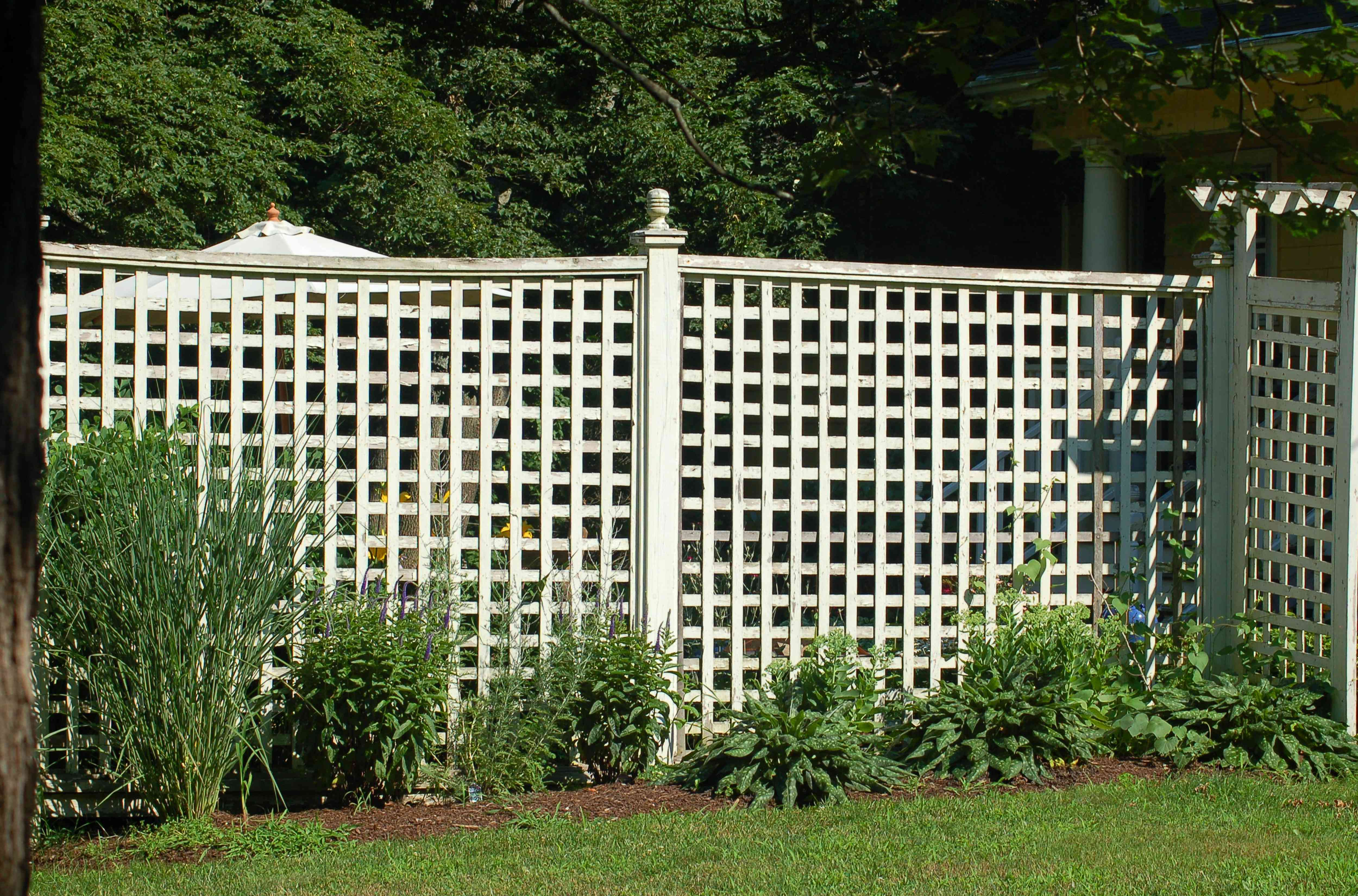 lattice fence with planting.