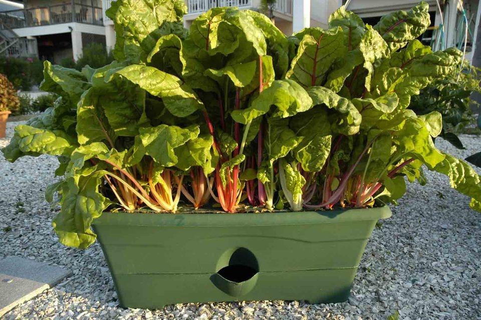 Garden grow box