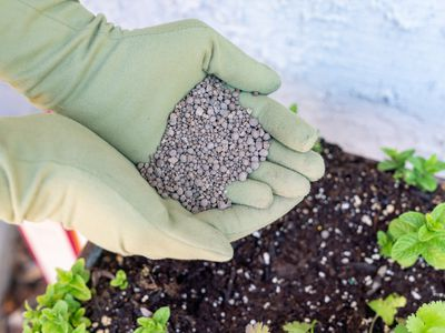 Calcium pellets being added to garden with gloves