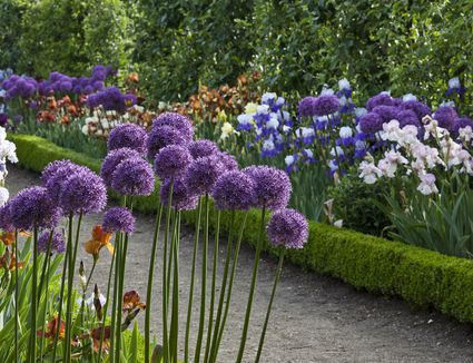 11 best perennial flowers for early spring springs best flowers for paths and borders gardening ideas mightylinksfo