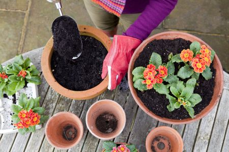 What S So Great About Soilless Potting Mix