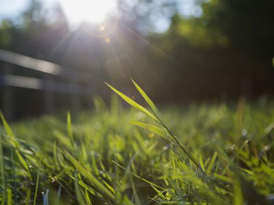 Grass with sun rays in the background