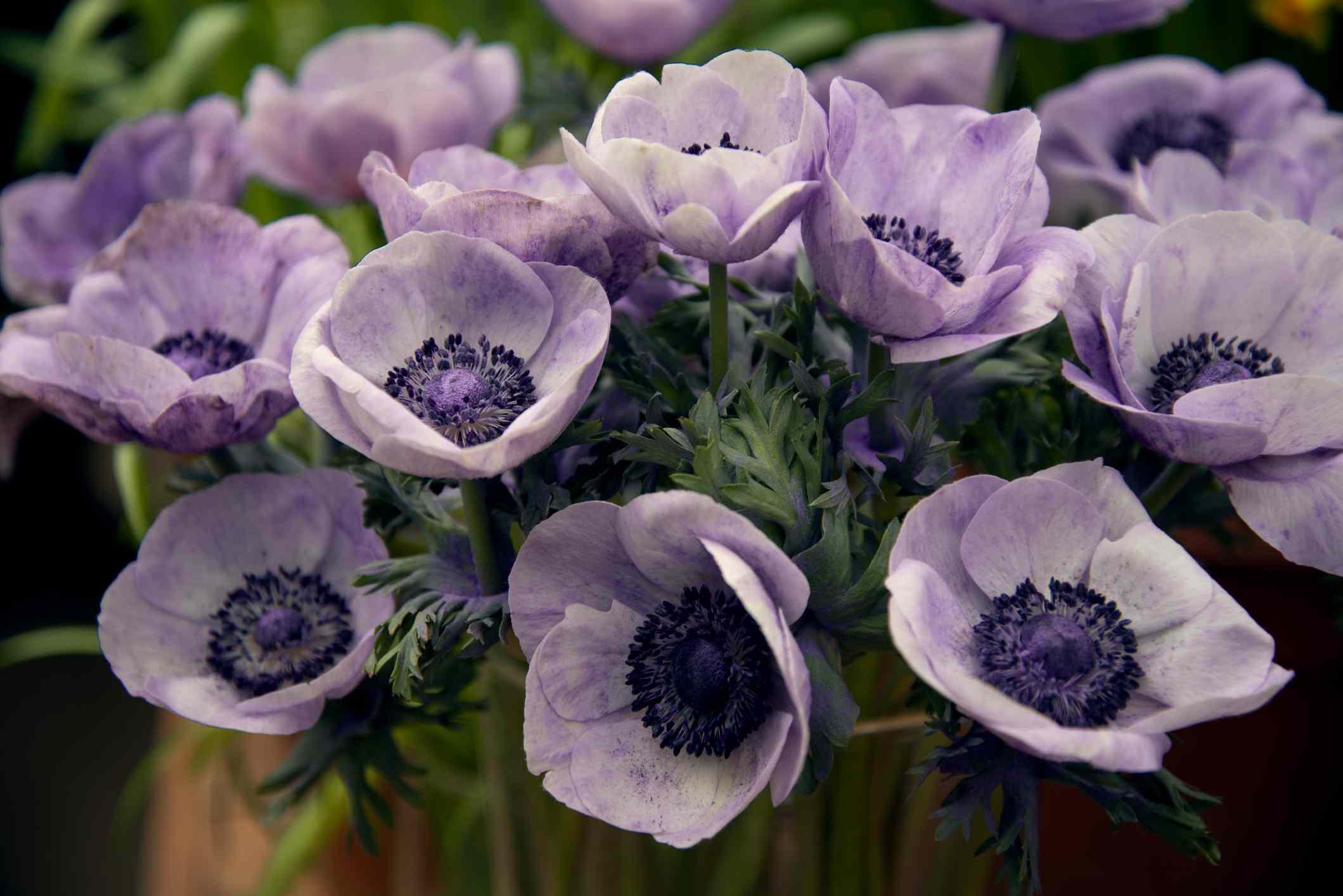 Purple Anemone flower bouquet