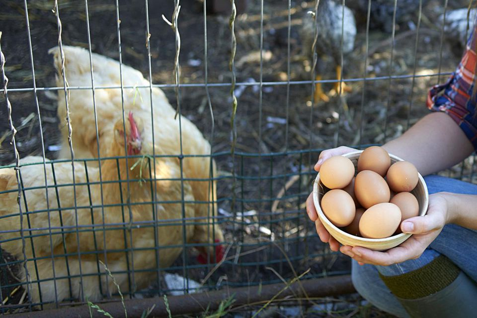 Woman holding bowl of eggs with two chickens in a cage.
