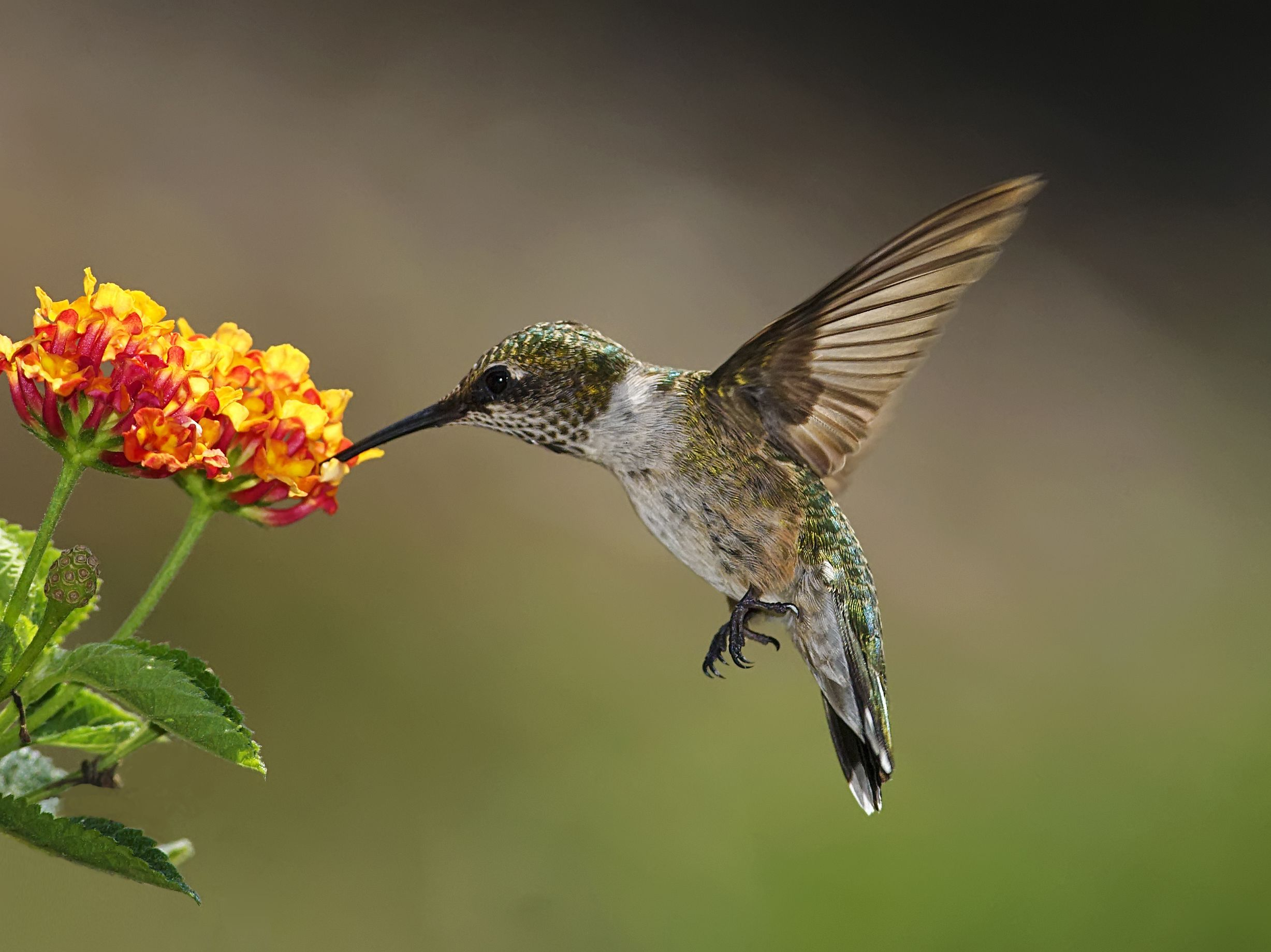 Best Plants To Attract Hummingbirds To Your Yard