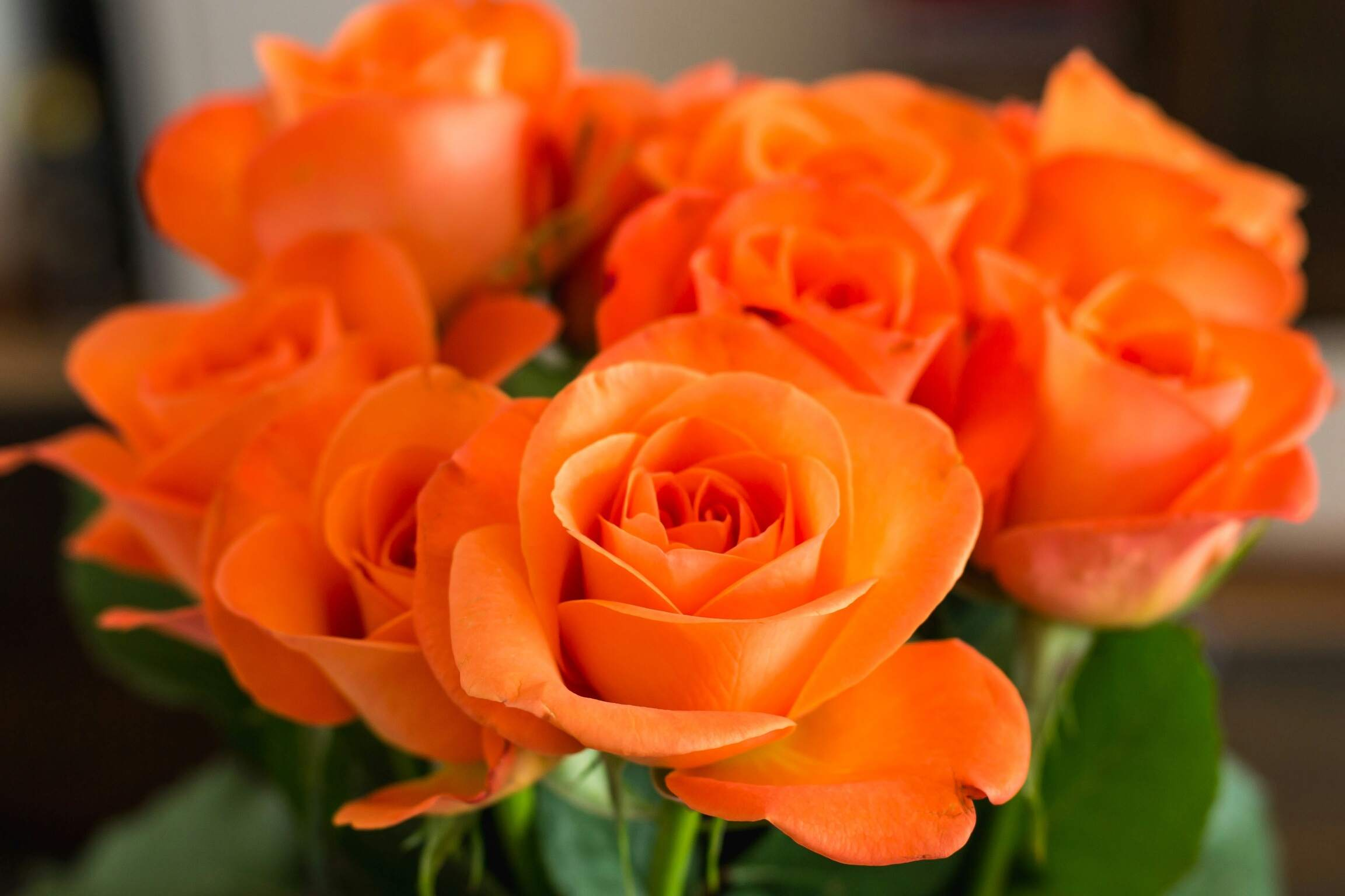 Types Of Roses Pictures Presenting A Variety Of Colors - Best of ppt flowers scheme