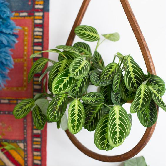 plantas estampadas