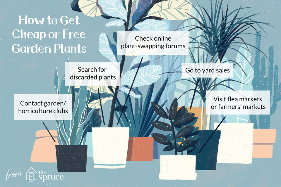 12 Ways To Find Free Or Cheap Garden Plants