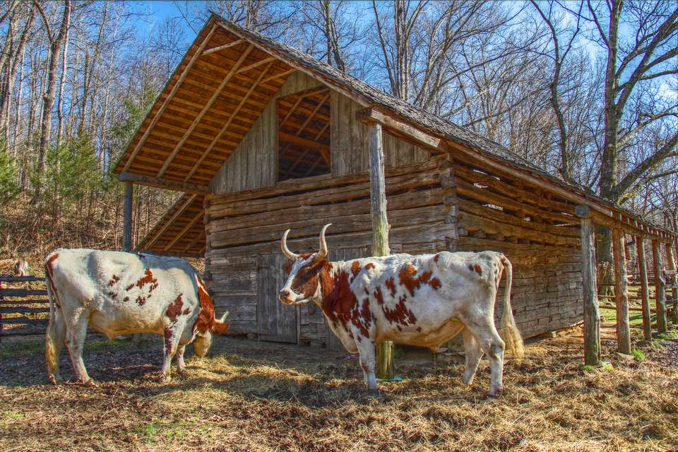 A shed with cows in the front