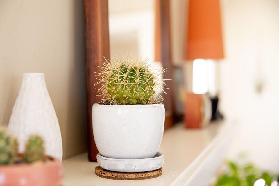 golden barrel cactus on a mantel