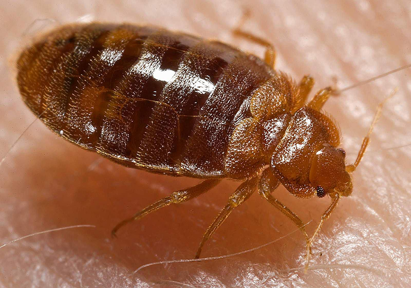 does your state have a bedbug law