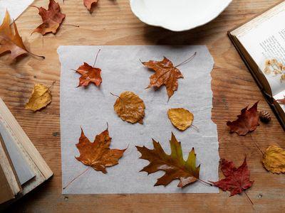 pressing fall leaves
