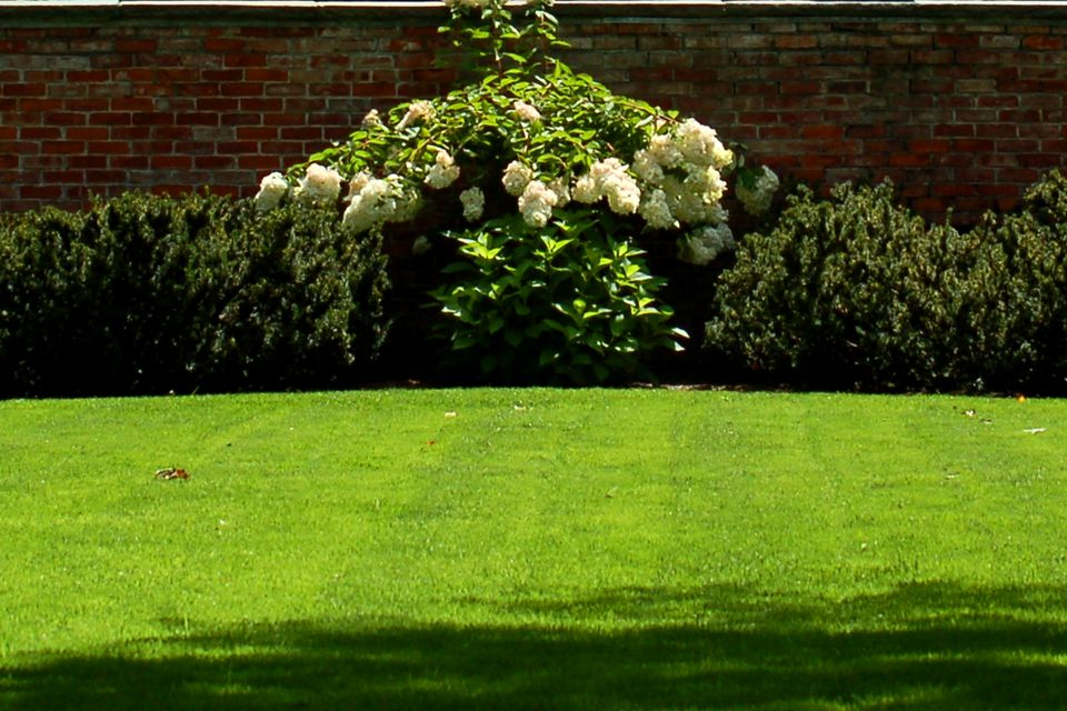 lawn with garden border