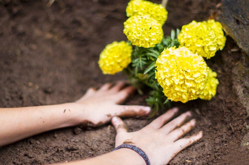 Girl Planting Marigold Flowers in Garden