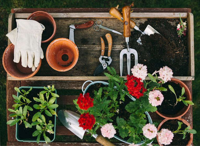 overhead shot of gardening tools and plants