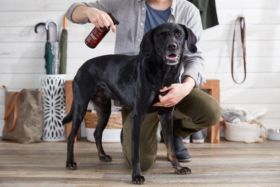 Black dog being sprayed with waterless pet wash