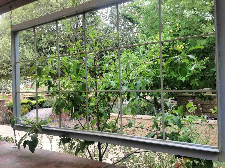 Vertical garden near hanging window pane.