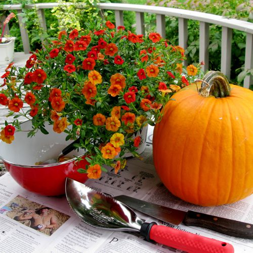 container gardening picture of what you'll need for pumpkin planter fall decoration