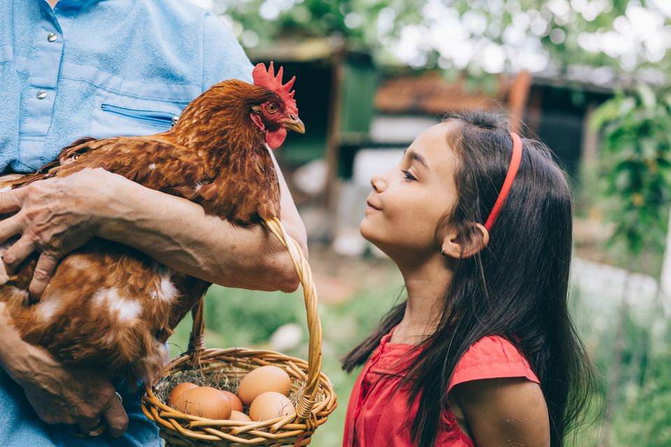 Young girl with hen in small farm