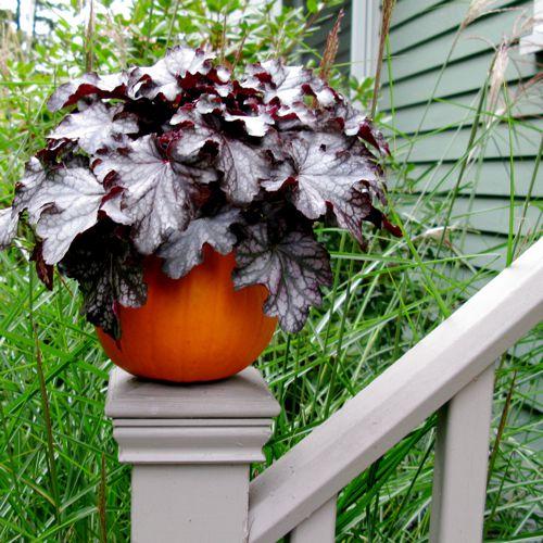 container gardening picture of pumpkin planter with heuchera